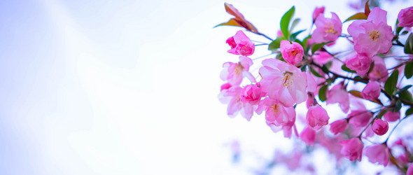 春风十里,花香弥漫