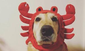 #摄影##狗狗# 周末不发皮革