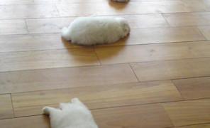 四只可爱的猫咪