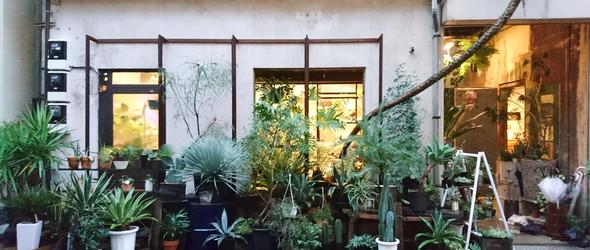 ROUTE BOOKS:被植物围绕的书店