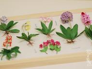 纸艺高原花卉系列之各种报春