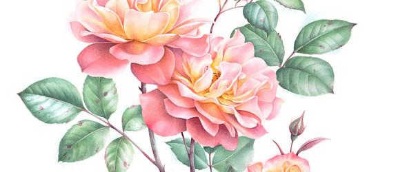 栩栩如生的植物插图 | Evgeniya Ivanova