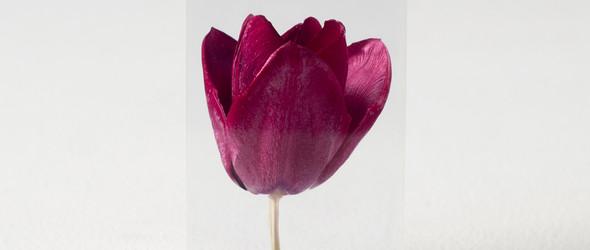 井上隆夫 | OLED蒲公英与花卉透明树脂灯饰
