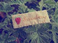 刺绣 | 草叶集