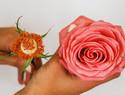 自制秋季必备的玫瑰水diy教程