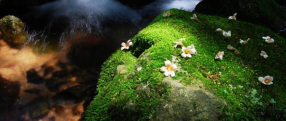 关于苔藓的栽培技术