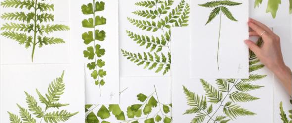 手绘美丽的植物,植物艺术家Jenny笔下的柔软与深沉