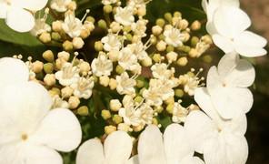 森林公园看花,很美,却叫不上来