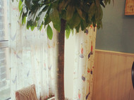 Macrame做一个花盆裙边