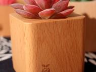 【润物原创手工】实木多肉花盆花器木质原木