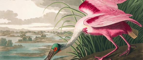 Birds of America(美国鸟类)| John James Audubon