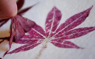 创意树叶拓印画diy教程:留下深秋红叶的美丽
