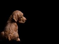 【旺财】黄杨木雕小黄犬 长物随园出品