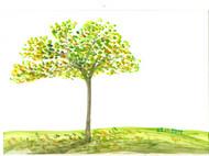 树的明信片