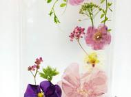 日韩可爱文艺iphone6s真花植物标本手机壳苹果7plus清新干花定制