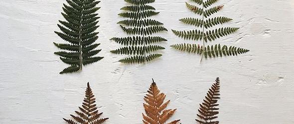 大自然最是慷慨 无处不是美 |植物押花 刺绣 绘画 水粉素材欣赏