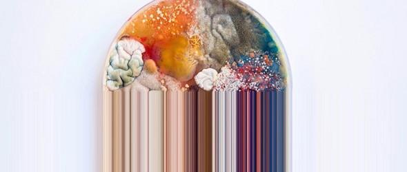 腐烂之美 | 艺术家Daria Fedorova 的微生物画作