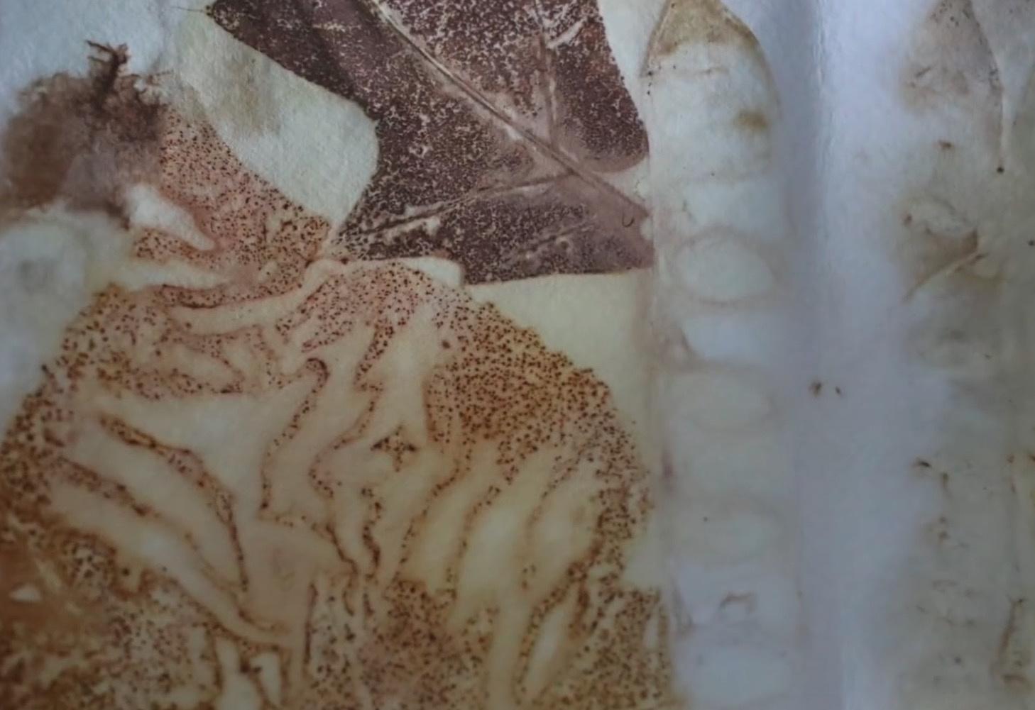 将自然的色彩转印到水彩纸上  | 生态染水彩纸DIY教程