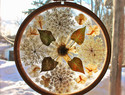 DIY曼陀罗造型押花绣箍 / Mandala Sun Catchers