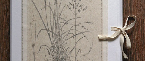 精美的植物标本装订册与植物标本与保存方法(视频)