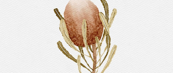 复古风的手绘植物 Niuscha Barzin