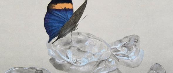 栩栩如生的手绘蝴蝶,像活的一样  外山諒