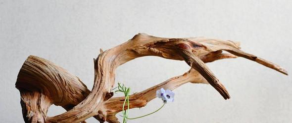 举重若轻的日本花道 | 日本花艺师渡来徹(watarai toru)的另类插花艺术