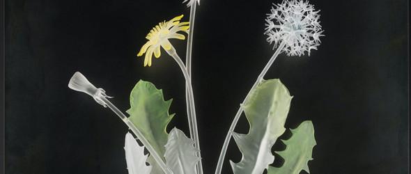 栩栩如生的玻璃药本植物 |Janis Miltenberger