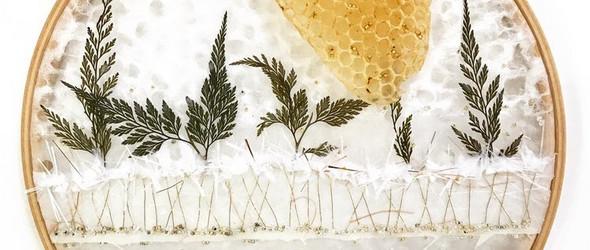 和蜜蜂共同创作艺术作品|艺术家Ava Roth的神奇脑洞
