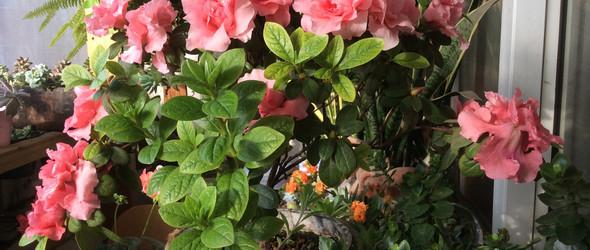 每年都有花儿开得艳