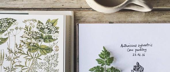 清新的归清新,自然的归自然? - 设计师Emma Mitchell 手绘的花卉植物插画