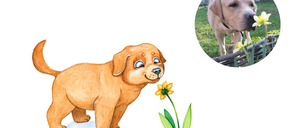 一组解锁了各种姿势的狗狗插画
