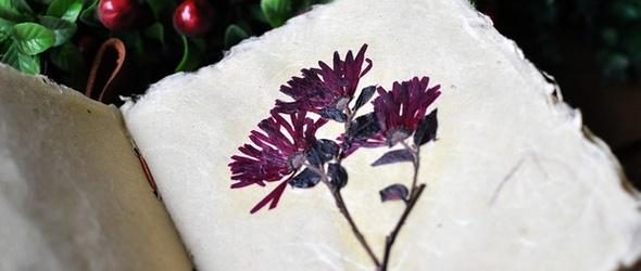 植物押花教程:《植物笔记》的制作过程