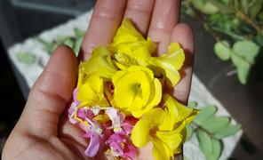 植物染实验中,用湿布摆花,洋葱