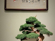 『松云点黛』新中式崖柏盆景,创意摆件,微景观