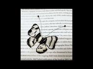 法式刺绣蝴蝶