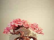 『十里桃花』新中式崖柏盆景,微景观,创意盆景,会所样板房摆件,孤品。