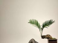 『万寿峰』奇石禅意摆件灵璧石文房案头石清供原石孤品