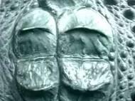 鳄鱼背皮镶嵌机车皮衣