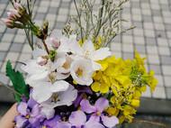 春日野花🌸