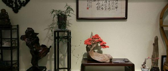 新中式崖柏盆景,创意摆件,微景观,创意盆景