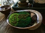 手工苔藓摆件