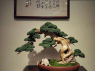 新中式创意盆景欣赏,崖柏手工盆景。