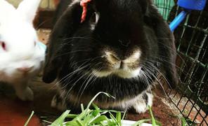 一只该减肥的兔子 就不能肥肥的