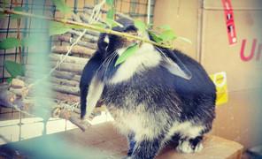 #兔子家#兔子除了直肠缺点以外