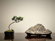 『元宝山』奇石禅意摆件灵璧石文房案头石清供原石孤品