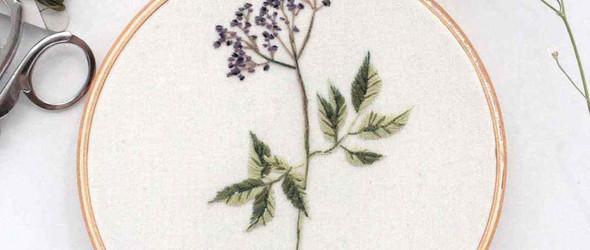 刺绣植物标本 | Anna Hultin