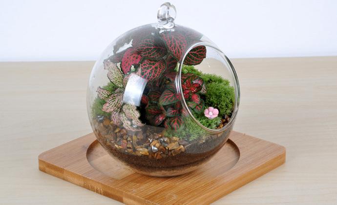依雯然 ❤秋天的童话❤ 苔藓盆栽 生日礼物 创意绿植 DIY生态瓶