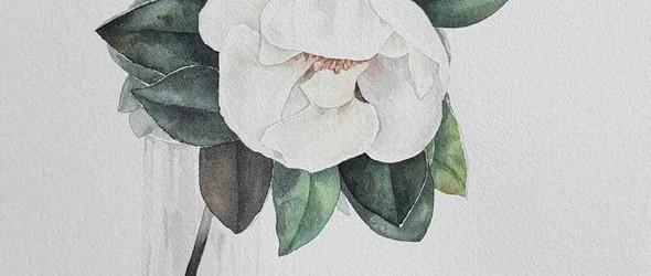 插画师@art_vasede 的手绘花卉与插花