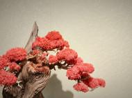 『山寺桃花』新中式崖柏盆景,创意摆件,微景观,创意盆景。